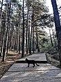 """Национальный парк """"Куршская коса"""" 20200930 103650.jpg"""