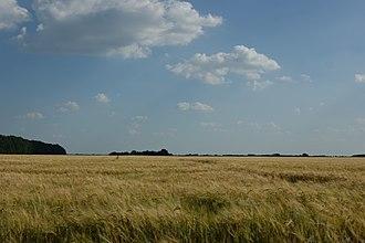 Dobrinsky District - wheat field, Dobrinsky district