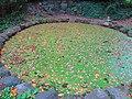 Осенний пруд в городском парке.JPG