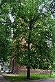 Парк XIX століття DSC 0105.jpg