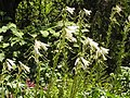 Растения в Седово 127.JPG