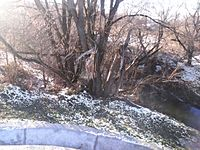 Снежеть.jpg