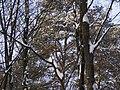 Украина, Киев - Голосеевский лес 21.jpg