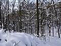 Украина, Киев - Голосеевский лес 82.jpg