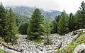 Шума и камења на Баба.jpg