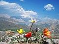دریاچه سدلار و کوه دماوند گُل کاری شده از کوه سیاپلاس Damavand mount and Lar lake (dam) - panoramio.jpg