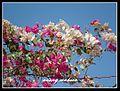 زهور الربيع٢.jpg