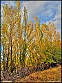 طبیعت پاییزی مراغه - panoramio.jpg