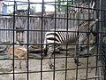 上野動物公園, Ueno Zoo(Ueno Zoological Gardens) - panoramio (34).jpg