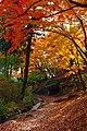 岩手公園蛍の里 Firefly Biosphere in Iwate Park - panoramio.jpg
