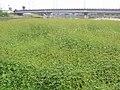 桃の木川サイクリングロード - panoramio.jpg