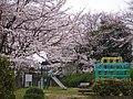 梅の里4号公園 2013.3.29 - panoramio.jpg