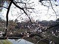 熊本城3.JPG