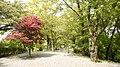 越前大野城2 - panoramio.jpg