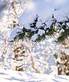 雪もどんどん溶けていく Dorint Sporthotel - panoramio.jpg