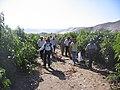 - panoramio - Culebron (3).jpg