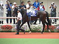 06 Tosen Ra (June 23, 2013. 54th Takarazuka Kinen) (9115306501).jpg