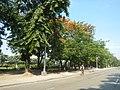 08449jfIntramuros Anda Circle Bonifacio Drive Port Area Manilafvf 43.jpg