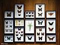 1.-Decorez-d-insectes-image 2.jpg