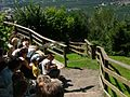 2008 07 15 Bird Care Centre of Castel Tyrol 60765 D9772.jpg