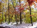 2011-10-30 16-Trees along Lindbergh Road in East Amwell, Hunterdon County, New Jersey after 6 to 7 inches of snow fell the previous day during the 2011 Halloween nor'easter.jpg
