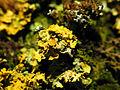 2013-01-31 15-26-16-lichens.jpg