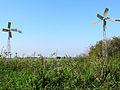 20140918 Gruttoveld bij Rassenbeektocht.jpg