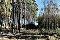 20141019-przemecki-park-krajobrazowy-buczyna-las-solna-gora-update.jpg