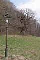 20150412 Sieghartskirchen Eiche 2773.jpg