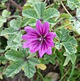 2015 11 06 Wildblume2.JPG