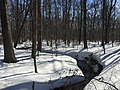 2016-01-31 13 22 53 A tributary of Hosepen Run in a snowy woodland eight days after the Blizzard of 2016 in the Franklin Farm section of Oak Hill, Fairfax County, Virginia.jpg