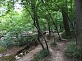 2017-08-10 17 51 03 View south along the Gerry Connolly Cross County Trail and up Difficult Run between Vale Road and Lawyers Road in Oakton, Fairfax County, Virginia.jpg