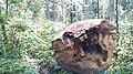 20200728 132446 Białowieża Forest.jpg