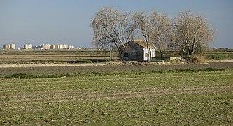 33. Vistes des de l'Ullal de Baldoví (Parc Natural de l'Albufera, País Valencià).jpg