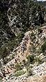33400 Boğazpınar-Tarsus-Mersin, Turkey - panoramio (6).jpg