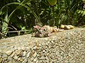 4217Foods Common houseflies Ants of the Philippines 31.jpg