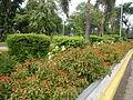 8095jfQuezon Memorial Circle City Monumentfvf 16.JPG