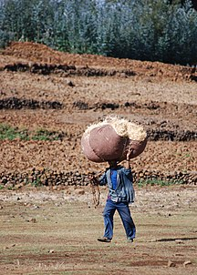 Amhara Region-Agriculture-A farmer carrying hay from the fields to his home, Amhara, Ethiopia, April 2011 (8406383290)