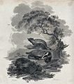 A hare being chased by a pack of dogs and a mounted hunting Wellcome V0020731.jpg