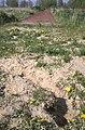 A long jump for a rabbit - geograph.org.uk - 1264598.jpg