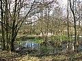 A shallow pond - geograph.org.uk - 1190875.jpg