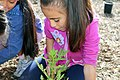 A young botanist (26422051656).jpg