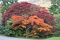 Acers at their best. - geograph.org.uk - 1586510.jpg