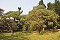 Acharya Jagadish Chandra Bose Indian Botanic Garden - Howrah 2011-01-08 9809.JPG