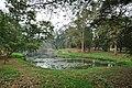 Acharya Jagadish Chandra Bose Indian Botanic Garden - Howrah 2011-02-20 1649.JPG