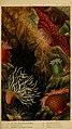Actinologia britannica - a history of the British sea-anemones and corals (Plate VI) (6850396970).jpg