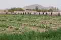 Afghan National Security Forces (ANSF) clear a field while conducting a dismounted patrol in Panjwai district, Kandahar province, Afghanistan, April 1, 2012 120401-A-VQ566-183.jpg