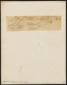 Agonus decagonus - 1700-1880 - Print - Iconographia Zoologica - Special Collections University of Amsterdam - UBA01 IZ13300089.tif