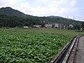 Agricultural fields in Jinshan 20100819.jpg