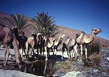 Ahaggar Mountains 1981 62.jpg
